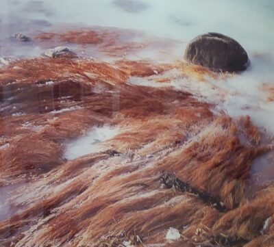 photo of sea grass and rock and ice by Mitchell Baum